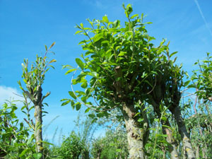 Wildhecke pflanzen granitplatten innenbereich for Pflanzen innenbereich